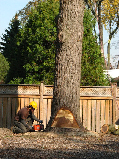 Сад by Four Seasons Tree Care