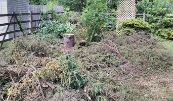 Diseased Fir Tree beyond saving