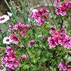 5 plantas aromáticas para usar como ambientador en casa