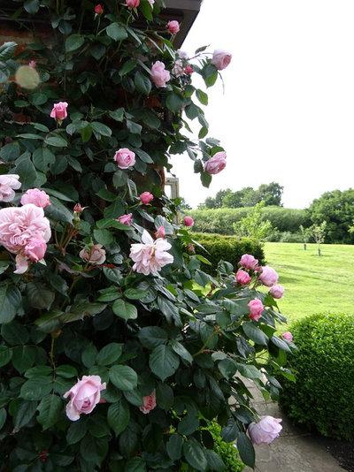 Classico  by Claudia De Yong Garden Design