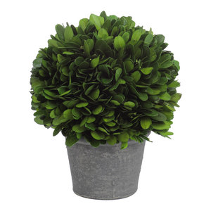 Verdell Boxwood Topiary in Round Pot, Small