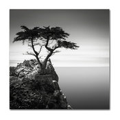 'The Lone Cypress' Canvas Art by Dave MacVicar