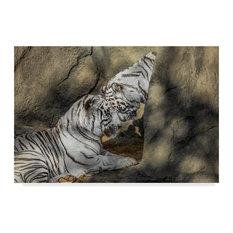 "Galloimages Online 'White Tiger Headbutt' Canvas Art, 47""x30"""