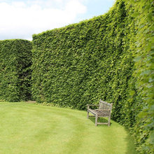 Hedges for Screening