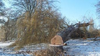 Greenwood Tree Removal