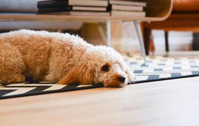 子犬と過ごすインテリア。人もワンちゃんも快適な住まいのヒント