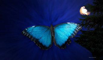 Blue butterfly ascending