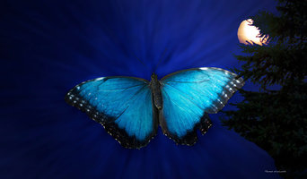 Blue butterfly ascending