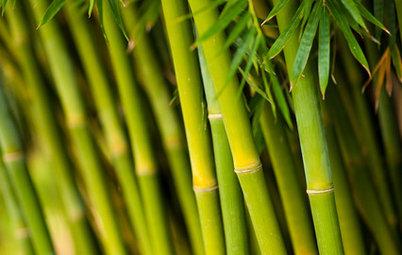 Bambus hitter i haven – sådan holder du liv i de grønne stængler