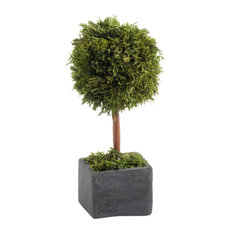 """6"""" Tall """"Cypress"""" Round Topiary, Green and Gray, Set of 2"""
