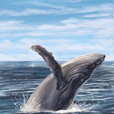 Boston, Massachusetts, Humpback Whale  Print, 16 x24