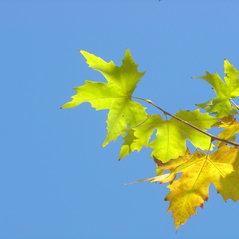 Oshan Trees Inc Camarillo Ca Us 93010