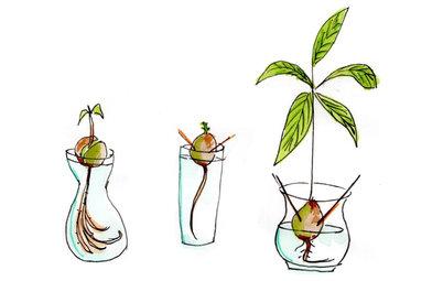 Giardinaggio Illustrato: Come Ottenere una Pianta di Avocado dal Seme?