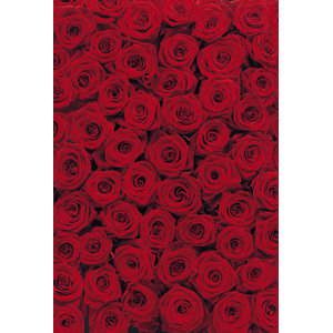 Red Roses Dramatic Floral Photo Wall Mural, 194x270 cm