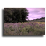 "Owling Dog Art Gallery - Lavender Fields in Summer Fine Art Photographic Print - Fine art photographic print, created by archival ink process also known as giclée, on canvas. Size is 20""x30"", ready to hang. The photo was captured on a New England morning at sunrise in 2015"