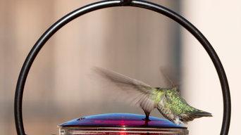 Backyard Oasis for Hummingbird Lovers