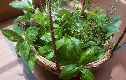 ハーブを楽しむ暮らし:育てたハーブの保存方法と簡単ごちそうレシピ