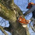 Tree Contractors Northwest Inc's profile photo