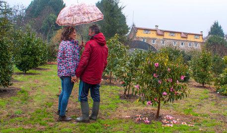 Jardín de la semana: En Galicia, el paraíso de las camelias