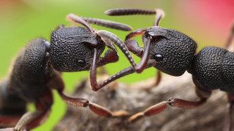 Pest Control Inner West