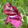 Ask a Garden Designer: What to Do in the Garden in June