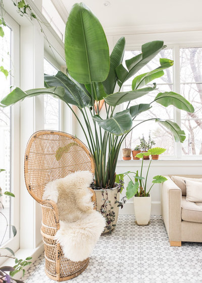 Living Room Plant. Eclectic by Melissa Miranda Interior Design 7 Favorite Indoor Plants for West Facing Windows