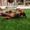 Top 10 Pet-Friendly Ideas That Encourage Outdoor Play