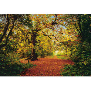 Autumn Forest Trees Photo Wall Mural, 388x270 cm