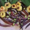 Summer Crops: How to Grow Okra