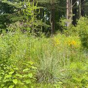 Photo de Metropolitan Garden Design