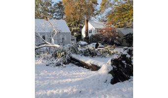Nicols Tree Service
