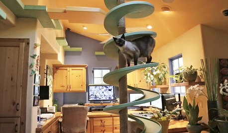 Incredible Home Catwalks Make for Purr-fectly Happy Cats