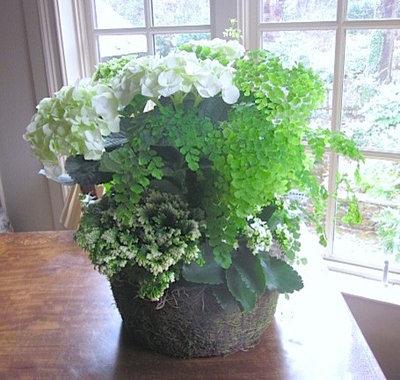 Traditional  by Pots and Petals, LLC