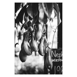 Food Market Snap Fine Art Print, Black and White, 50x75 cm