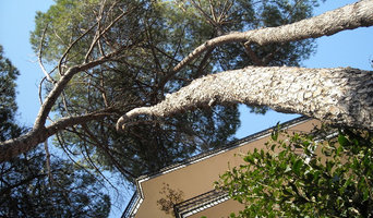 Stabilità degli alberi