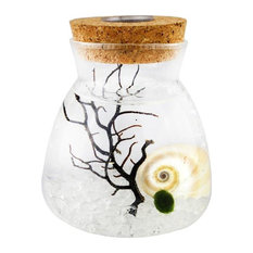 Conical Marimo Flask Terrarium With LED Lights, Blue Hawaii Sand