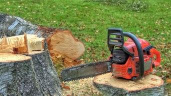 Tree Removal Sacramento