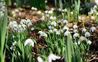 Fleurs du mois : Les perce-neige annoncent le printemps