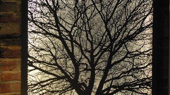 Kates Oak Tree