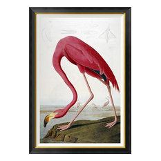 """American Flamingo"" Framed Canvas Giclee by John James Audubon, 30""x42"""