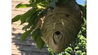 Rescue 1 Pest & Termite Control