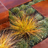 Great Plant: New Zealand Wind Grass