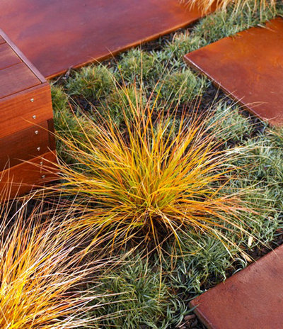 Nz Grasses For Landscaping Great plant new zealand wind grass workwithnaturefo