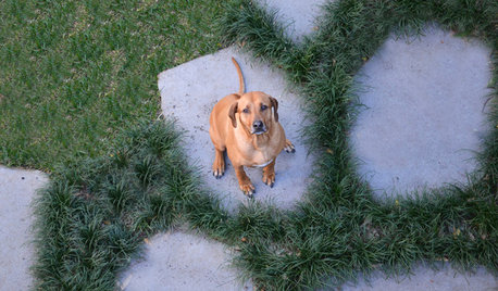 Dog Days: 8 Garden Features to Delight Your Pooch