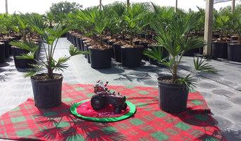 Waggie Palm