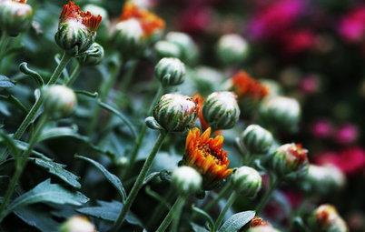 8 variétés colorées qui fleurissent en hiver