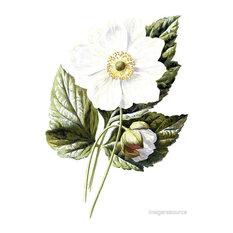 """""""Japanese Anemone"""" Botanical Print, 60x84 cm"""