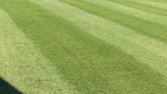 Bermuda lawn