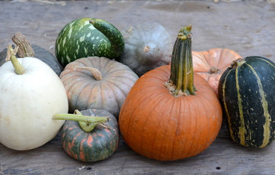 Join Us for a Parade of Pumpkins