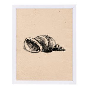 """""""Illustrated Sea Shell 1,"""" Art Print, 9""""x11""""x1"""""""